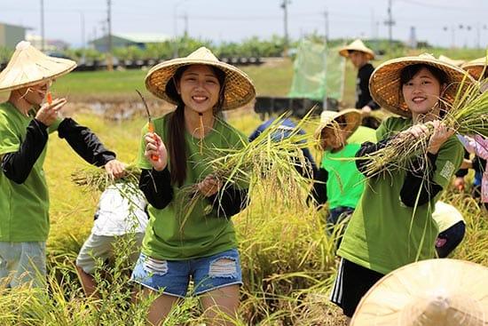 「來坐農創工作室」精心設計收割體驗活動,參與民眾深入其中。